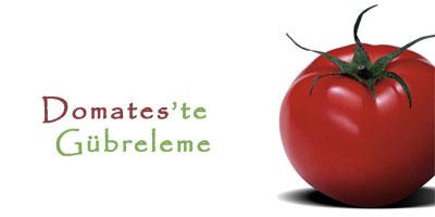 domates 721060 Domates Yetiştiriciliği ve Domates Tarımı, Domates Nasıl Üretilir