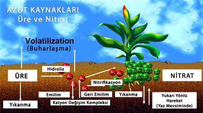 sekil1 713527 Domates Yetiştiriciliği ve Domates Tarımı, Domates Nasıl Üretilir